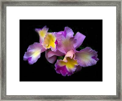 Orchid Embrace Framed Print