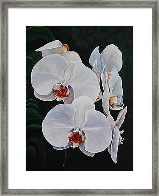 Orchid Fever Framed Print by Pam Kaur