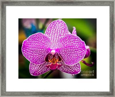 Orchid Flower Framed Print by Edward Fielding
