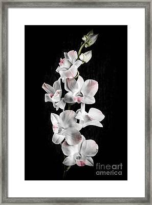 Orchid Flowers On Black Framed Print by Elena Elisseeva
