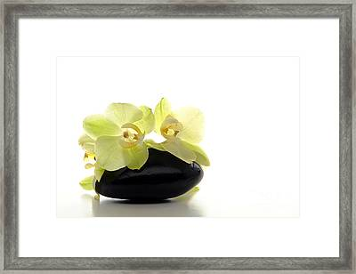 Orchid Flowers On Polished Stone Framed Print by Olivier Le Queinec