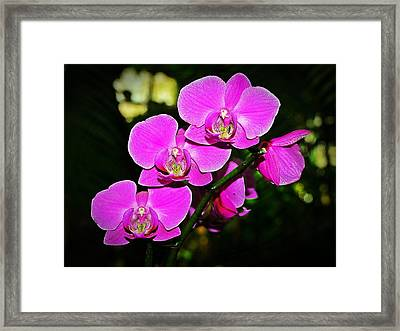 Orchid Flutter Framed Print by Liudmila Di