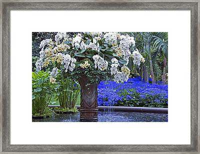 Orchid Fountain Framed Print by Jennifer Nelson