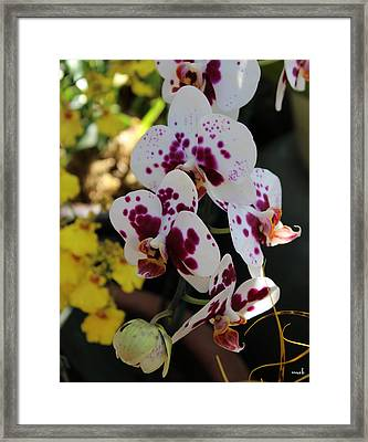 Orchid Four Framed Print by Mark Steven Burhart