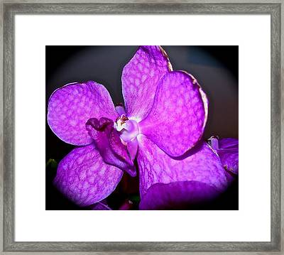 Orchid From Art Gallery Framed Print