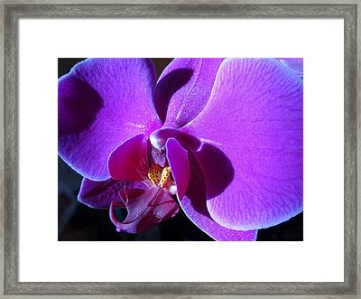 Orchid From My Valentine Framed Print