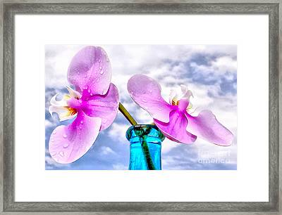 Orchid Glory Framed Print