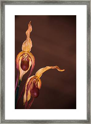 Orchid Greeting Framed Print
