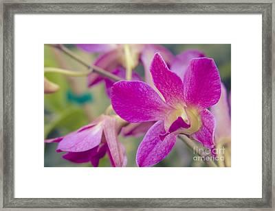 Orchid - Haliimaile Spring Pink Framed Print