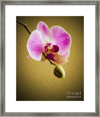 Orchid In Digital Oil Framed Print