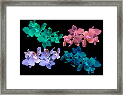 Orchid In Four Different Colors. Framed Print by Tommytechno Sweden