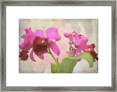 Orchid In Hot Pink Framed Print