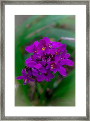 Orchid In Motion Framed Print