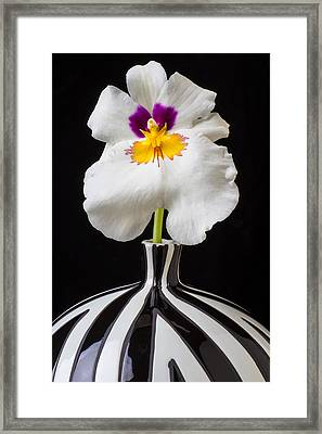 Orchid In Striped Vase Framed Print by Garry Gay