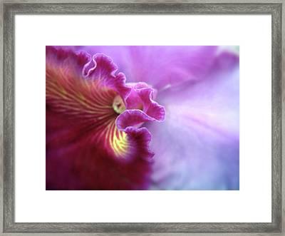 Orchid In Violet Framed Print