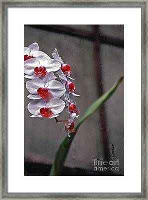 Orchid In Window Framed Print by Linda  Parker