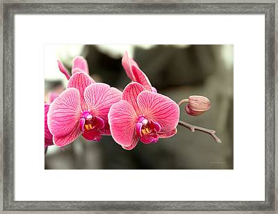 Orchid - It Takes Two To Tango Framed Print