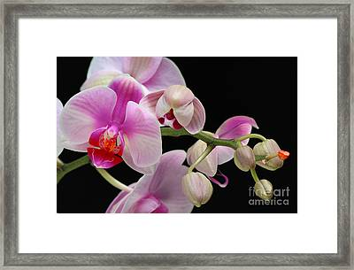 Framed Print featuring the photograph Orchid by JRP Photography