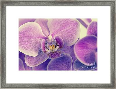 Orchid Lilac Dark Framed Print by Hannes Cmarits