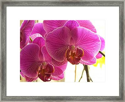 Framed Print featuring the photograph Orchid by Lingfai Leung