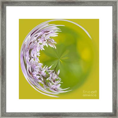 Orchid Moon Framed Print by Anne Gilbert