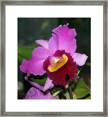 Orchid Nose 2 And A Reminder To Utter The Words Thank You. Framed Print