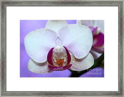 Orchid Of Love Framed Print