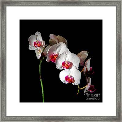 Orchid On Black Framed Print