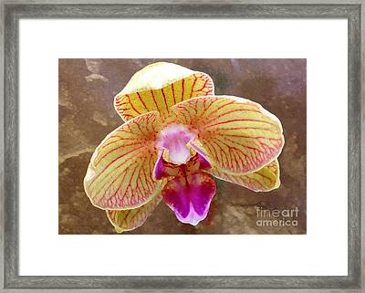 Orchid On Marble Framed Print by Barbie Corbett-Newmin