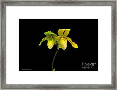 Orchid Paphiopedilum Druid Spring Framed Print by Susan Wiedmann