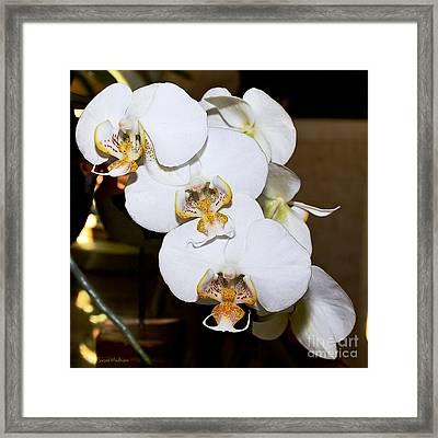 Orchid Phalaenopsis Dutch Lady Framed Print by Susan Wiedmann