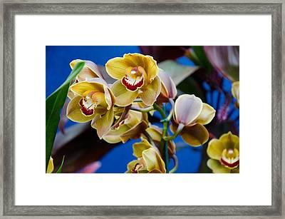 Orchid Pt 1 Framed Print by Heidi  Kleva