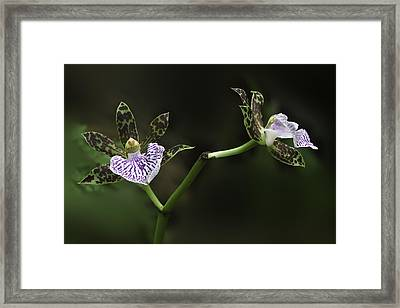 Framed Print featuring the photograph Orchid by Ram Vasudev
