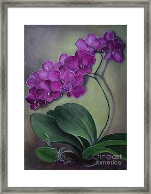 Orchid Framed Print by Randol Burns