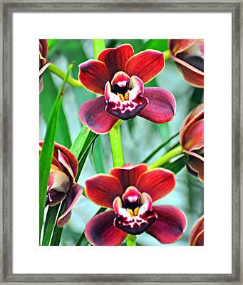 Orchid Rusty Framed Print by Marty Koch