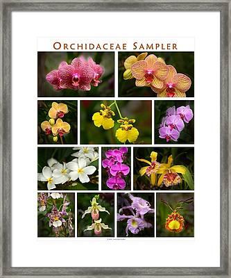 Orchid Sampler Framed Print