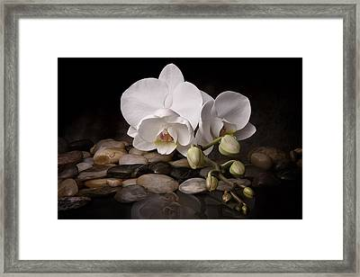 Orchid - Sensuous Virtue Framed Print by Tom Mc Nemar