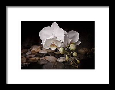 White Orchid Framed Prints