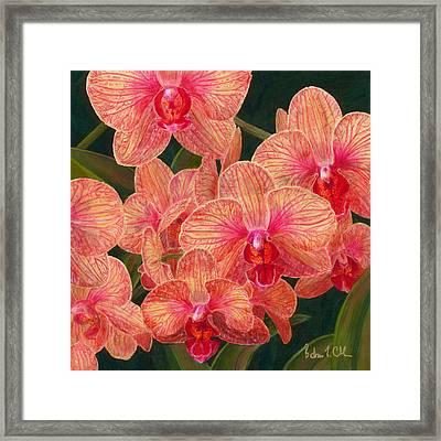 Orchid #5 Framed Print by Barbara L Clark