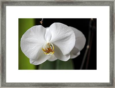 Framed Print featuring the photograph Orchid by Silke Brubaker
