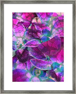 Orchid Splash Framed Print by Diane Alexander