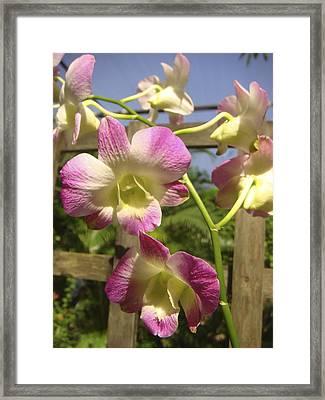 Orchid Splendor Framed Print