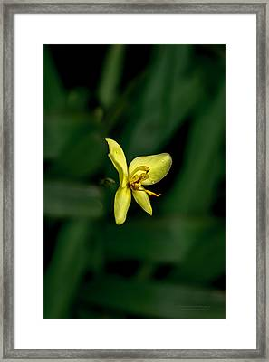 Orchid Suspense  Framed Print