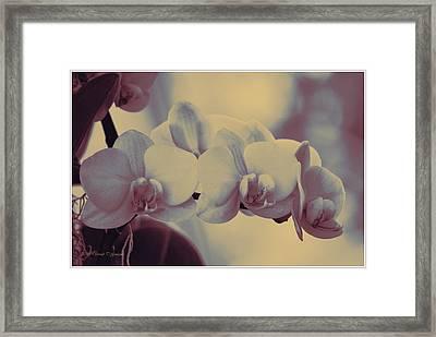 Orchid Tale Framed Print by Sonali Gangane