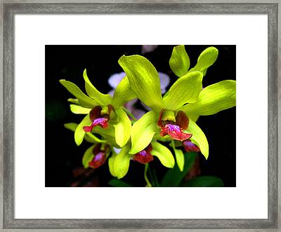 Orchid. Tenerife. Canary Islands. Framed Print by Andy Za