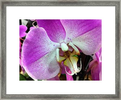 Orchid Throat Framed Print by Lyn Pacific