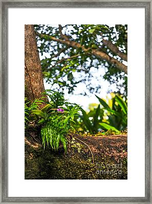 Orchid Tree Moss And Beauty Framed Print by Liesl Marelli