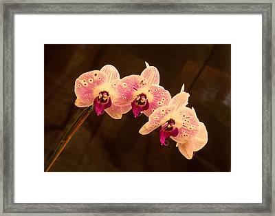 Orchid Triad 2 Framed Print
