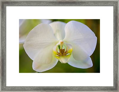 Orchid Trilogy I Framed Print by Darby Donaho