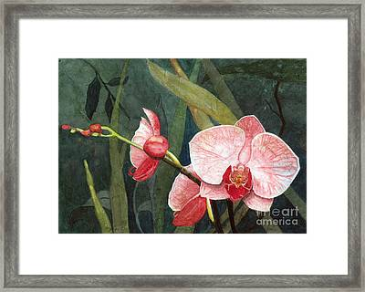 Orchid Trio 2 Framed Print by Barbara Jewell